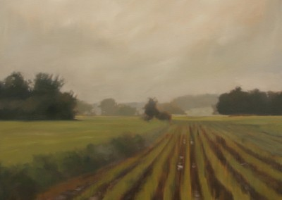 Fields After Rain
